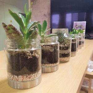Plantes dans des pots en verre.