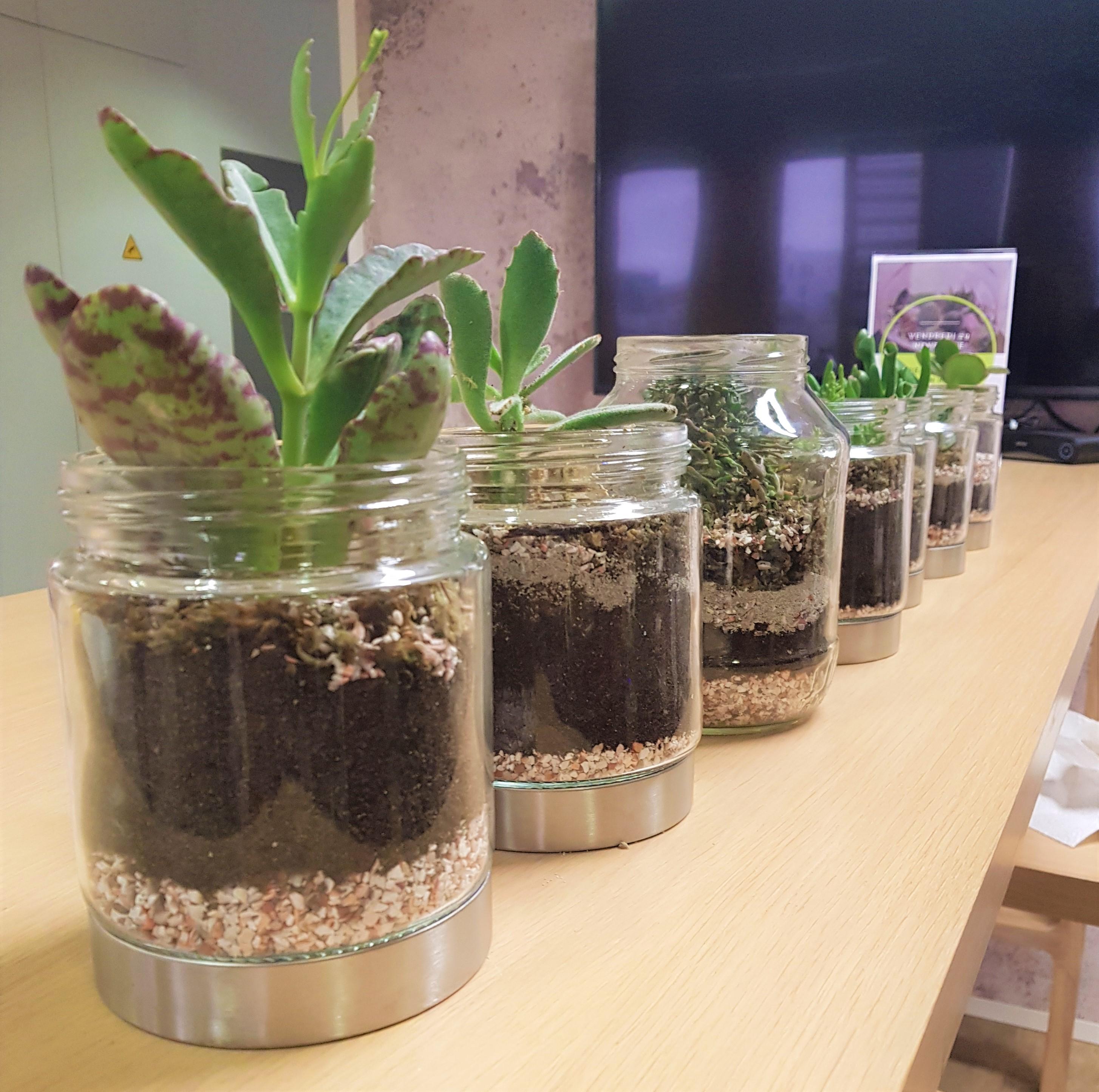 Plantes dans des pots en verre