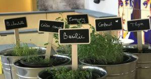 Plantes d'épices en pots